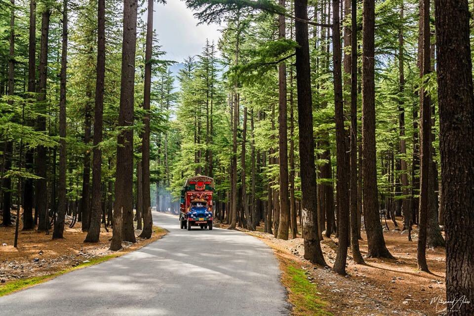 Ushu Forest, Swat
