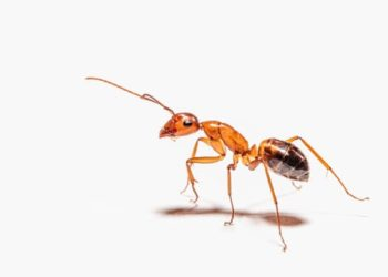 power of an ant